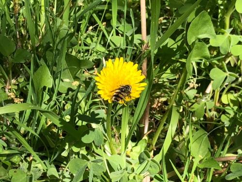 a dead bee